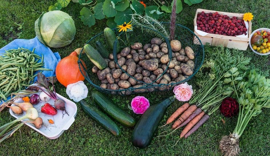 Huerto en casa hortalizas