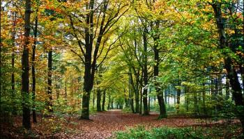 Planes para disfrutar del principio de otoño